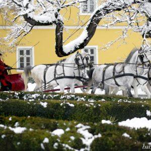Five-horse sleigh